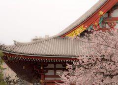 Das japanische Kirschblütenfest Hanami