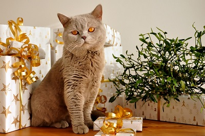 Die besten Geschenkideen für Crazy Cat People